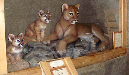 4ft Mountain Lion and 3ft Cub for Vail Resort